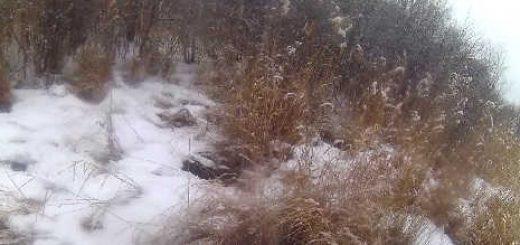 Охота на зайца с пегой гончей видео