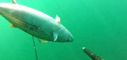 Подводная охота в июне видео
