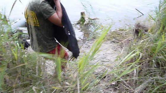 Поймали 30-килограммового белого амура видео