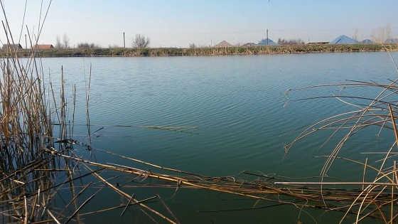 Рыбалка в Жамбылской области видео