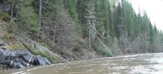 Встреча с медведем на рыбалке видео
