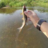 Июльская ловля карасей видео