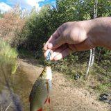 Как ловить окуня и краснопёрку на спиннинг видео