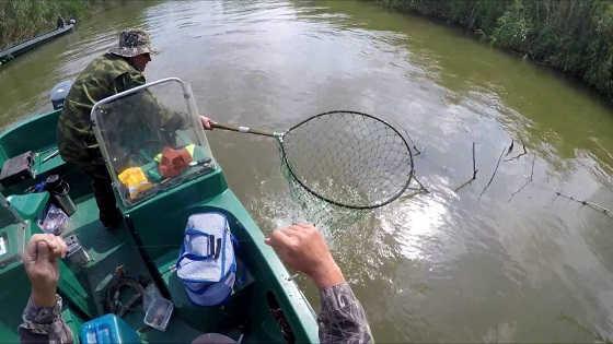 Ловля сазана на жмых видео