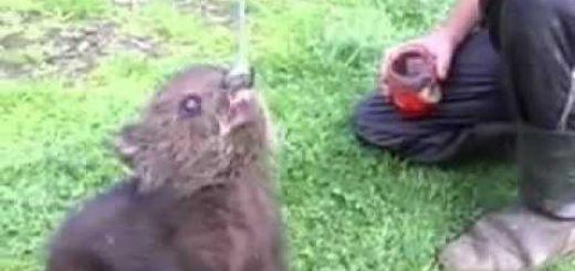 Медвежонок и варенье видео