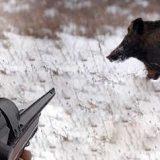 Охота на кабана на номере видео