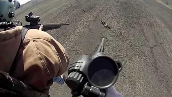 Охота на кабанов с вертолета видео