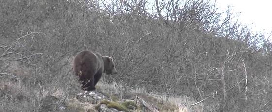 Охота на медведя на Камчатском крае видео