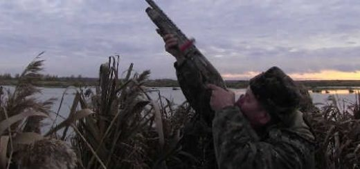 Охота на утиных перелетах видео