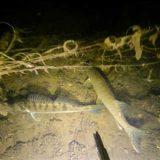 Подводная охота: Дулепова яма - видео