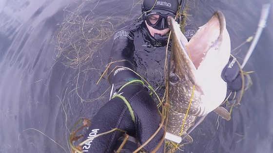 Подводная охота на щуку в Ленинградской области видео