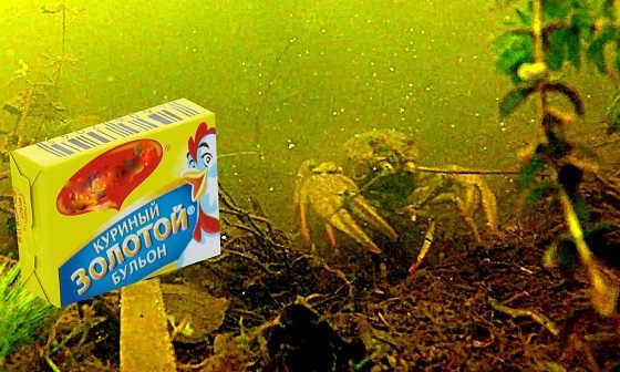 Реакция рыбы на бульонные кубики видео