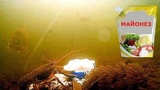 Реакция рыбы на майонез видео