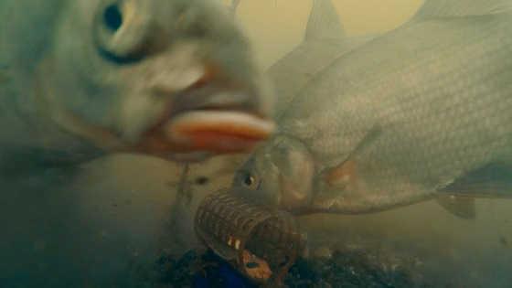 Рыбалка на фидер: подводная съемка