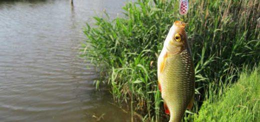 Рыбалка на краснопёрку видео
