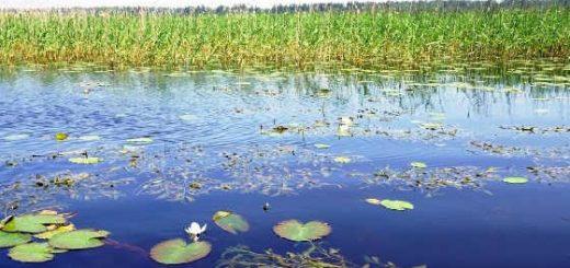 Ловля щуки в заросших водоемах в дож видео