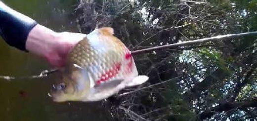 С арбалетом по малым речкам видео