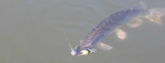Хищник на большой реке