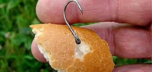 Как насадить хлеб
