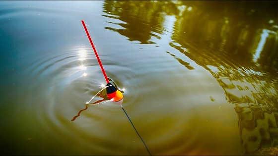 Ловля линя и карася на утренней зорьке