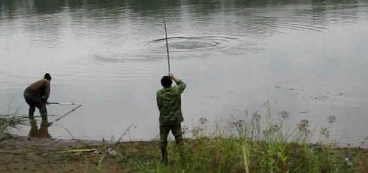 Ловля сазана на Каме видео
