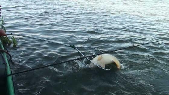 Ловля сазана на жмых на Ахтубе видео