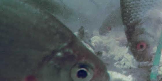 Рыба накинулась на макароны