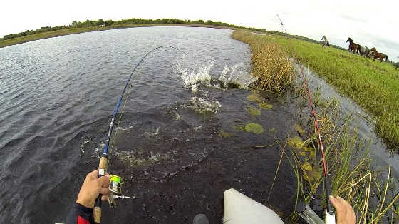 Рыбалка в Ирландии видео