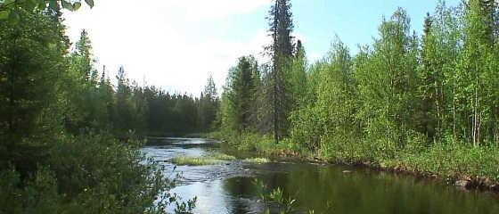 Рыбалка с ночёвкой в тайге видео