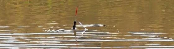 Ловля карася на поплавок осенью