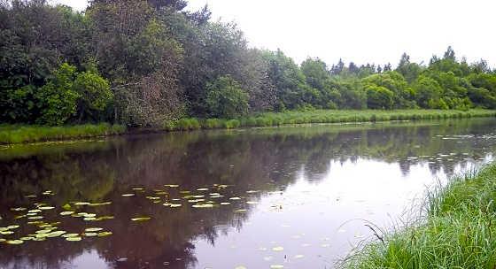 Ловля окуня в корягах на малой речке
