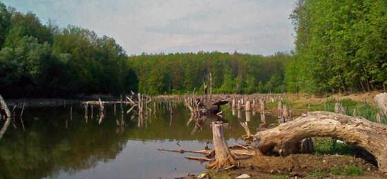 Ловля рыбы в коряжнике видео