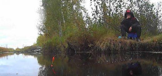 Осенний карась