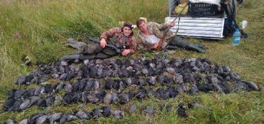 Промысловая охота на птицу