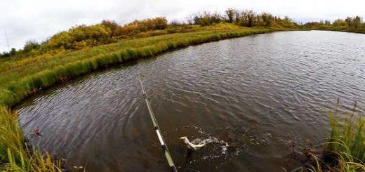 Рыбалка осенью на спиннинг