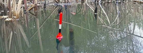 Рыбалка в камыше видео