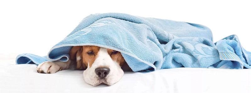 Мочекаменная болезнь и почечная недостаточность у собак