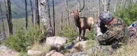 Изюбр чуть не наступил на охотников