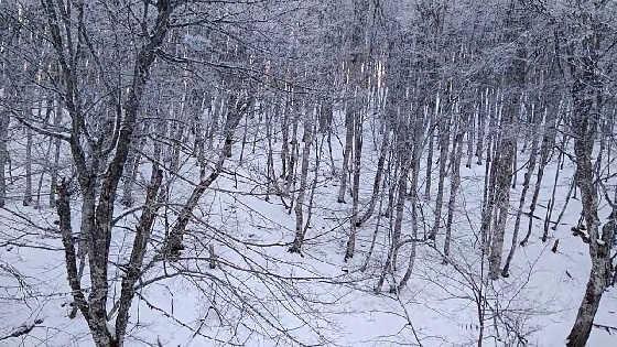 Кабаны в лесу