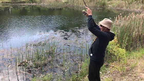 Ловля щук на малом водоеме