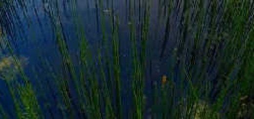 Ловля щуки на живца в болоте