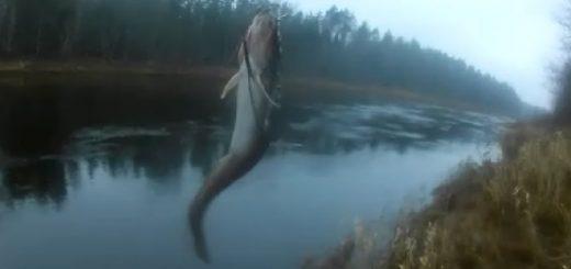 Налимья рыбалка на закидушки в ноябре