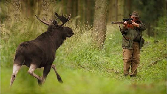 Охота на лося в 2018 году