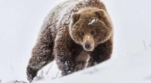 Охота на медведя в 2017