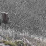 Охота на медведя на Байкале