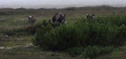 Охота на медведя в Магаданской области