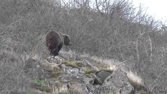 Охота на медведя в октябре