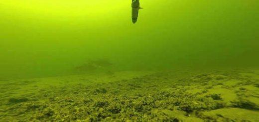 Подводная охота на Волге в июне