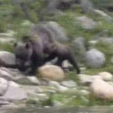 Погоня медведя за рыбаками