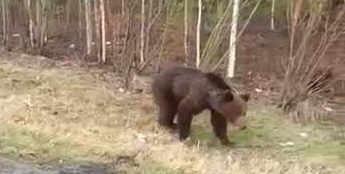 Что может произойти при встрече с медведем